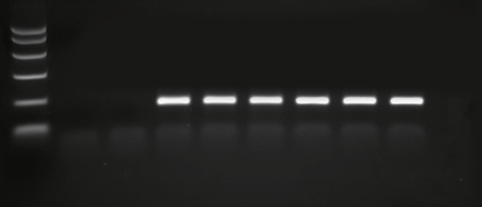 End point PCR